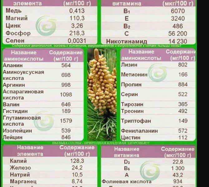 Полезни свойства на Боров прашец